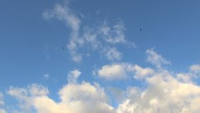 Vultures soaring against beautiful evening sky stock footage