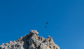 Vultures soaring. Turkey vultures soar over cliffs in the Mexican Baja peninsula Stock Photos