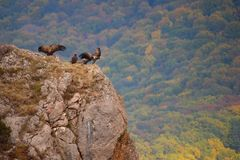 Vultures stand on a rock in the mountains on a beautiful background royalty free stock photography