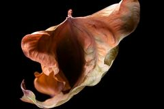 Vulva shape leaf royalty free stock photography