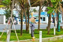 Vung Tau, Vietnam - January 26, 2018: The worker watered the palm trees. royalty free stock image