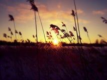 Vuoksa_Lake Stock Photo