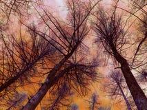 Vurige bomen Stock Foto's