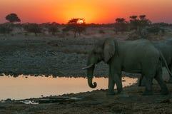 Vurige zonsondergang met olifanten Stock Foto