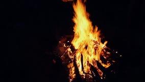 Vuur bij donkere nacht, kampvuur stock videobeelden
