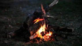 Vuur bij nacht stock videobeelden