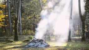 Vuur die in het park op een zonnige de herfstdag roken stock footage