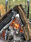 Vuur en heemst Stock Afbeeldingen