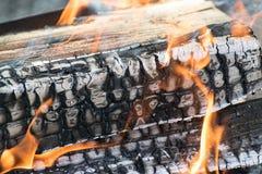 Vuur in het bos Royalty-vrije Stock Foto's