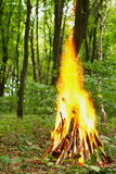Vuur in het bos Stock Foto