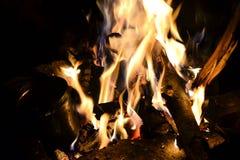 Vuur in het bos Stock Fotografie