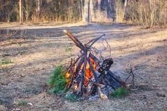 Vuur van pijnboomtakken in het de lentebos royalty-vrije stock afbeeldingen