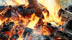 Vuurbrandwonden neer in het bos in de herfst, stokken en steenkolen in brand dichte omhooggaande, langzame motie stock video