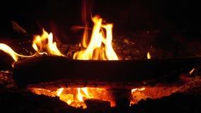 Vuurlit bij Nacht in het Bos stock videobeelden