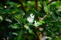Vuurradbloemen royalty-vrije stock fotografie