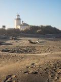 Vuurtoren bij strand Stock Foto's