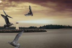 Vuurtoren en zeemeeuwen Stock Fotografie