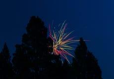 Vuurwerk achter Sommige Gesilhouetteerde Bomen Stock Afbeeldingen