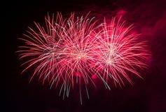 Vuurwerk in de donkere hemel Royalty-vrije Stock Foto