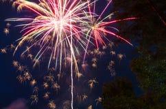 Vuurwerk op de donkerblauwe hemel en de bomen als achtergrond Stock Fotografie