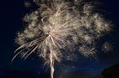 Vuurwerkpaardebloem stock afbeelding