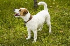 Vuxen hund utomhus royaltyfri fotografi