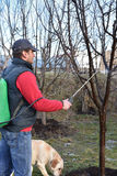 Vuxen man som besprutar fruktträd och hans hund fotografering för bildbyråer