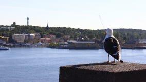 Vuxen Seagull som sitter på ett konkret staket på bakgrunden av staden på en solig dag tillbaka till operatören, är, att betrakta arkivfoton