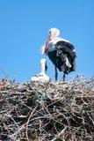 Vuxen stork med behandla som ett barn på redet Royaltyfria Bilder