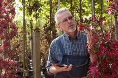 Vuxen trädgårdsmästare nära blommorna Händerna som rymmer minnestavlan I exponeringsglasen ett skägg, bärande overaller I trädgår royaltyfri bild