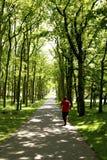 Vuxet jogga för man Arkivfoto