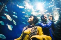 Vuxna man- och kvinnaturister som håller ögonen på fiskar i akvariumtunnelen royaltyfri bild