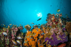 VVarious coral fishes, squirrelfish swimming above coral reefs in Gili, Lombok, Nusa Tenggara Barat, Indonesia underwater photo Stock Photo