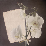 Vvintage card with orchid Royalty Free Stock Image
