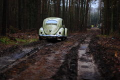 Vw beetle 1957. Retro Vw beetle 1957 forest royalty free stock images