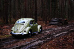 Vw beetle 1957. Retro Vw beetle 1957 forest stock photo