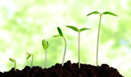 Väx och att växa, växten Arkivfoton