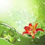 växt av släkten Trifolium tappar liljan Arkivbild