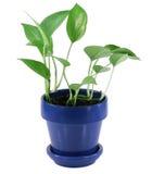 växt för grönt hus Royaltyfria Foton