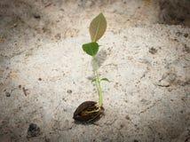 Växtbörjan Arkivbild