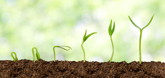 Växter som växer från jord - växtframsteg Royaltyfri Fotografi
