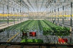 växthus Arkivfoton