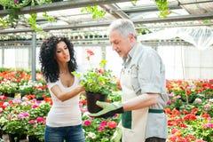 Växthusarbetare som talar till en kund Arkivbilder