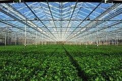 växthusplantor Royaltyfri Fotografi
