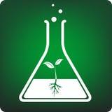 växtprovrör Arkivbild
