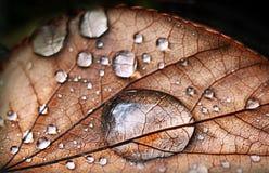 Váyase con gotas de rocío Fotografía de archivo
