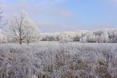 Vyazma. Late in the fall. The first autumn frosts in the Smolensk region. Russia royalty free stock photos