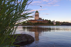 Vyborg Castle on a colorful sunset sky. Looking through the coastal reed royalty free stock photos