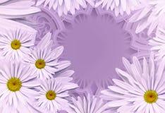 Vykort för ferien Blom- bakgrund med vita tusenskönor på en violett bakgrund placera text vita tulpan för blomma för bakgrundssam Arkivbilder