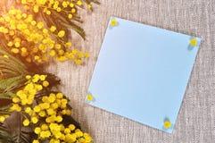 8 vykort för mars - det blåa kortet med fritt utrymme för text nära mimosan blommar Royaltyfria Bilder